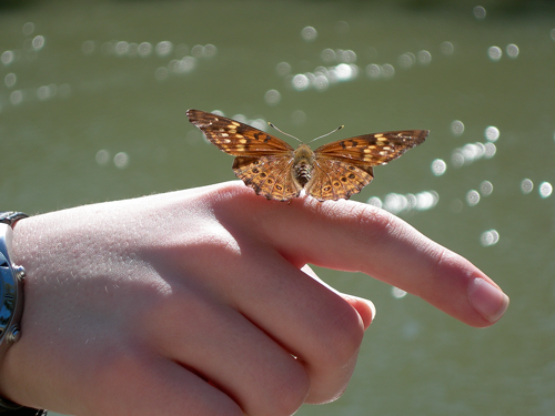 62c3b-dmcjr_butterfly