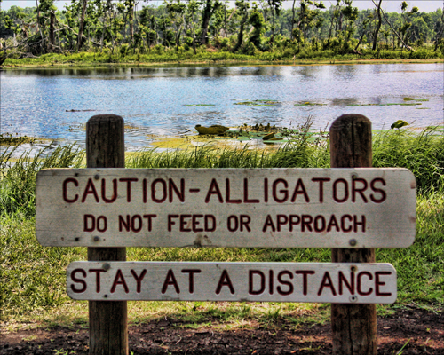 Alligators_Sign