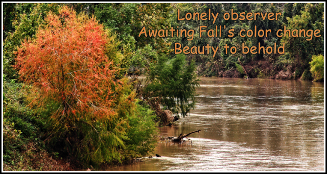 Colorado_River_Tree_Haiku_web