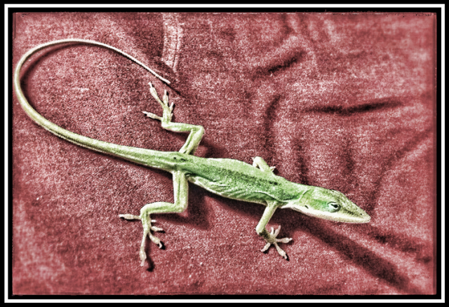 Lizard_1704_web_frame