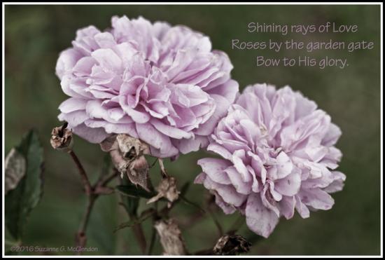 roses_haiku_2495_frame_web