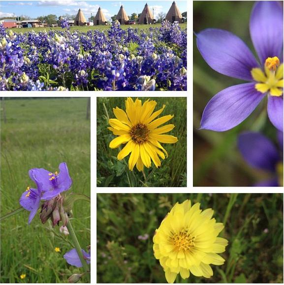 multi_flowers_2015