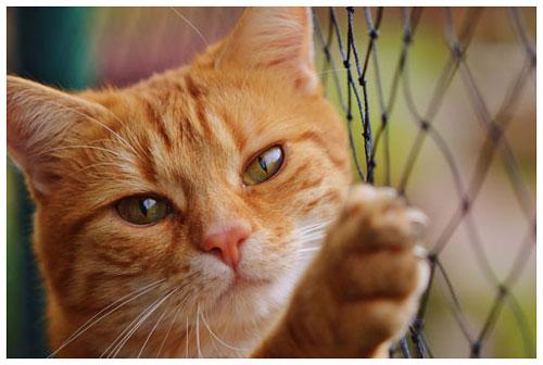 cat-1044750_500