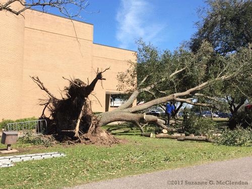 tornado_tree_wcjc_0541_web