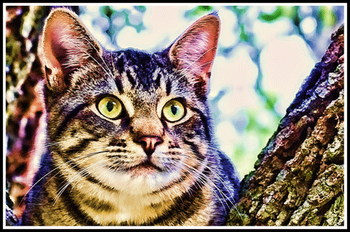 Caturday_Art_Neighbor_Kitty_3416_Crop_ColorShot_Frame