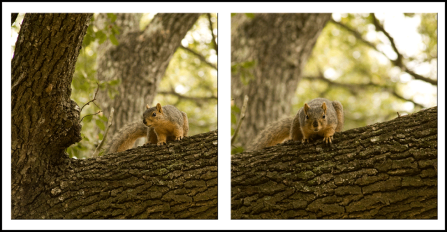 Squirrel_3225_3226_1000