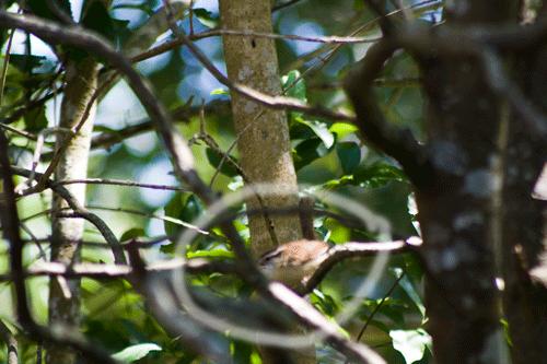 Bird_4102_circled