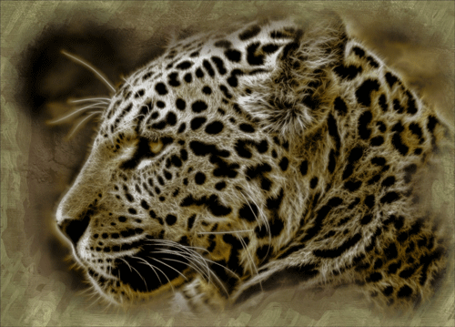 jaguar-95313_500