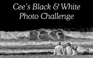 Cees_black-white-banner