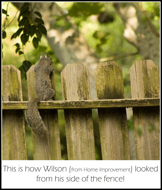Squirrel_6970_14-May-2017_crop_frame_Wilson_650