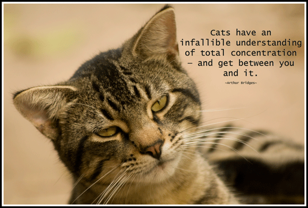 TIgger_5220_Concentration_Quote_600
