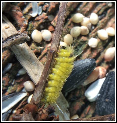 Caterpillar_WeekofJune11-17_2017
