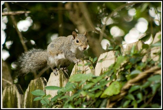 Squirrel_2562_30May2017_550