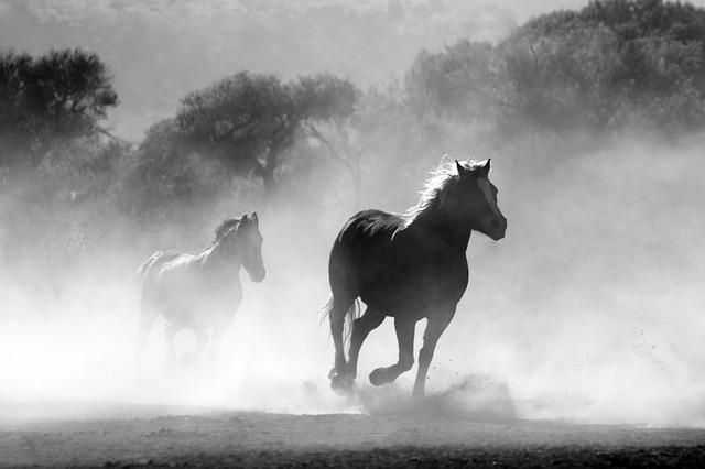 horse-430441_640_Pixabay