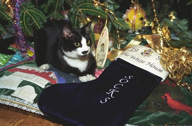 socks-the-cat-1084179_640