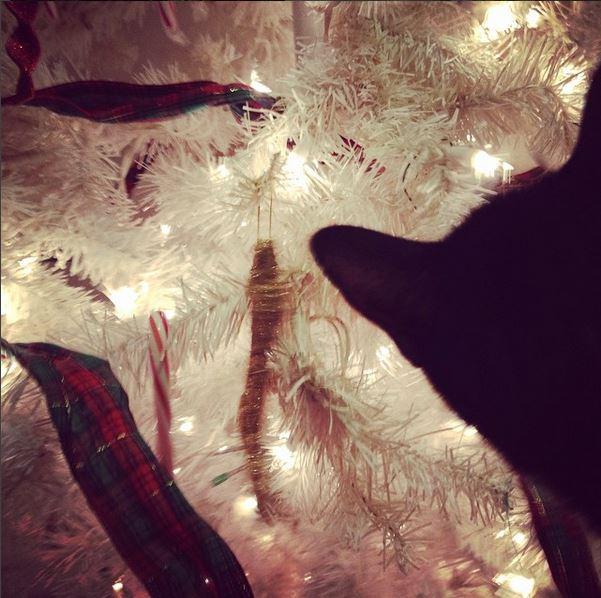 Xerxes_Christmas_2014