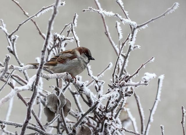 sparrow-3123070_640