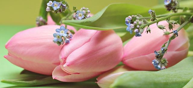tulips-2167753_640