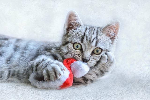 cat-3871896_640