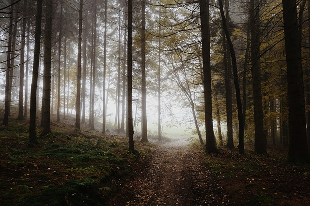 forest-1014293_640