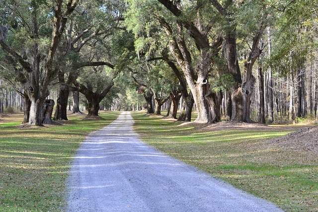 oak-trees-2405592_640