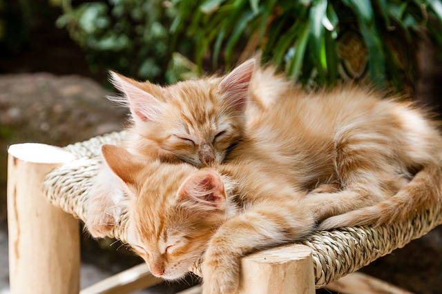 kittens-1916542_640