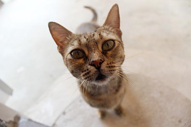 cat-1919495_640