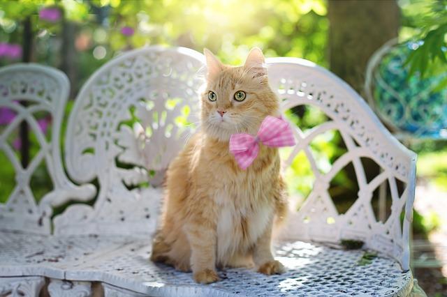 cat-2358830_640