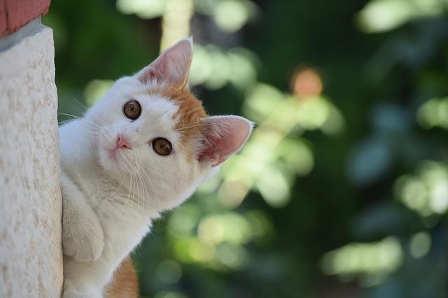 cat-2552481_640