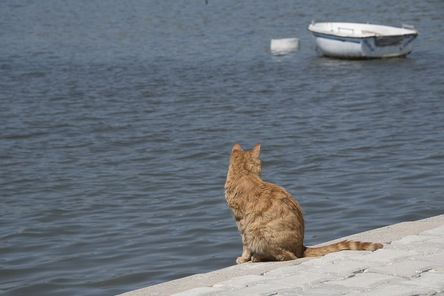 cat-3747620_640