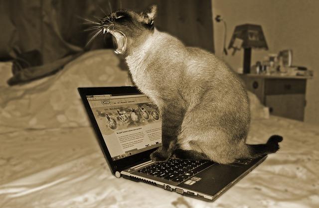 cat-244060_640