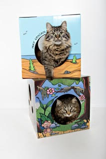 Kitty Box 1