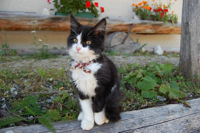 young-cat-2761507_640