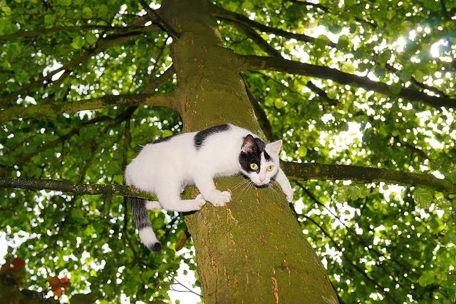 cat-1494914_640