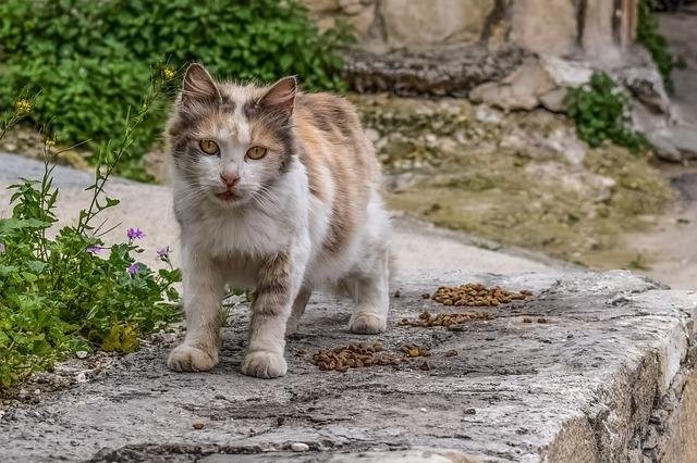 cat-3214806_640