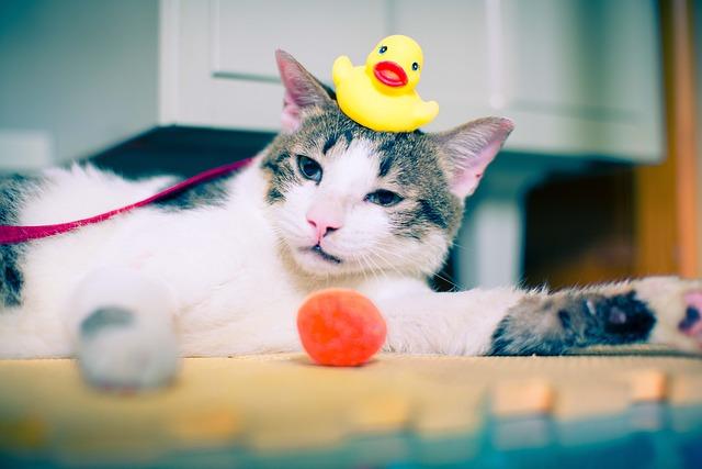cat-931969_640