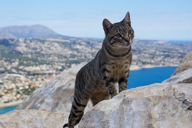 cat-3400589_640