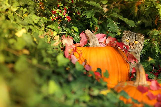 autumn-3725510_640