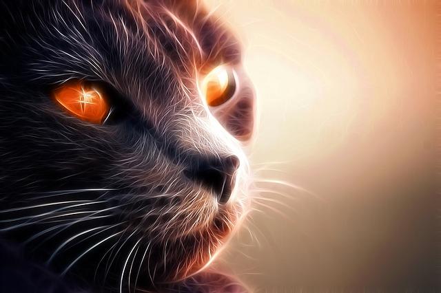 cat-1274098_640
