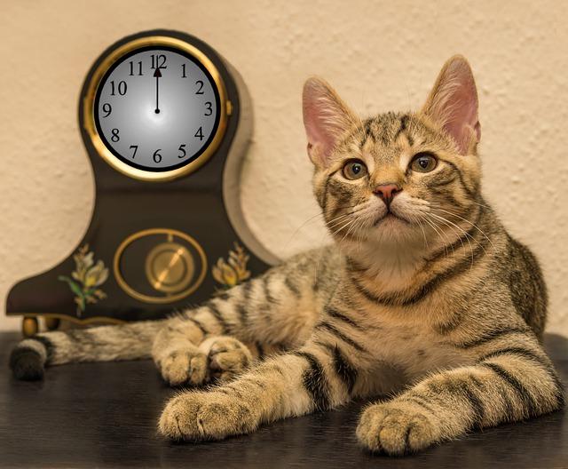 cat-4626761_640
