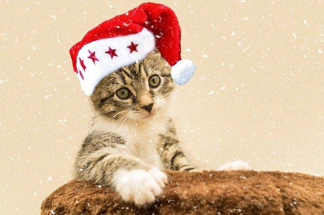 cat-4663673_640